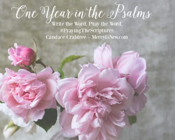 One Year in the Psalms COVER