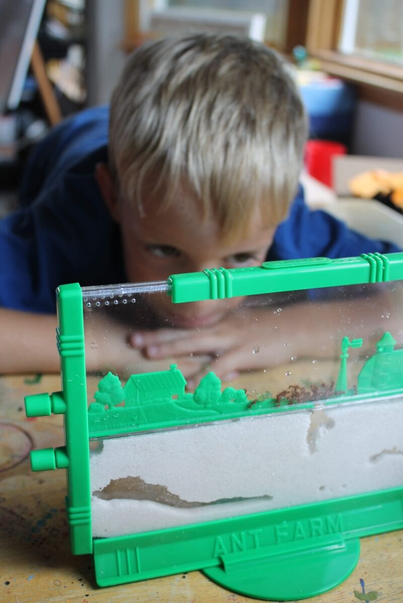Learning all about ANTS!